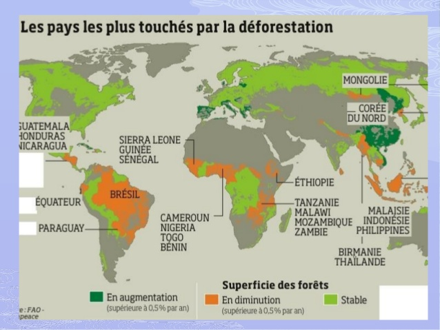 la-destruction-de-la-foret-amazonienne-69-638