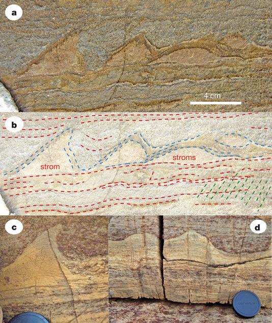4990664_6_01ad_les-stromatolites-du-groenland-a-presentent_e1f43da2b6ba84cee5edfb8544ee2f4b