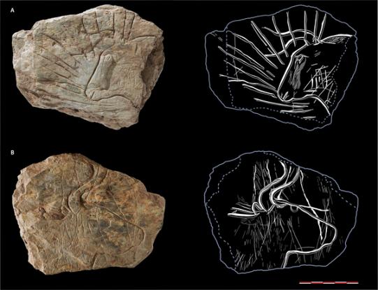 Une exceptionnelle découverte d'art rupestre vieux de 14000 ans en Bretagne-3