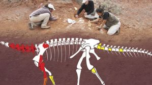 Descubren-Argentina-dinosaurio-FotoTomada-ctyscomar_MEDIMA20180709_0119_5