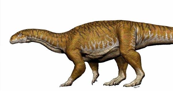 DinoBonesNK_field_image_socialmedia.var_1531187179