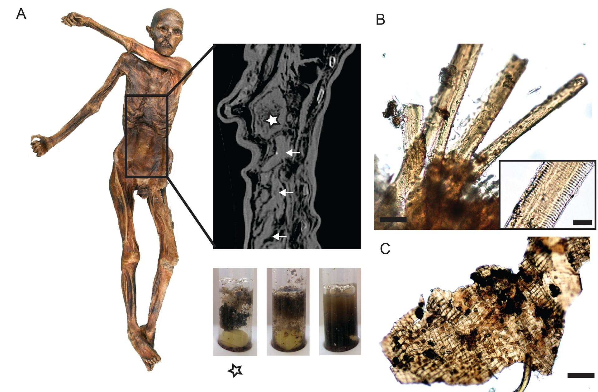 techniques de datation scientifique utilisées sur Otzi